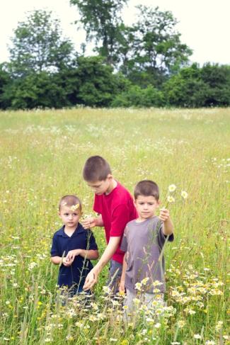 flower field 2351