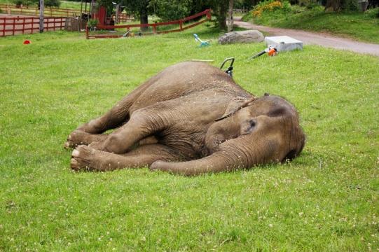 elephants 3008