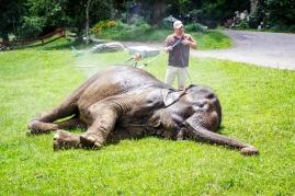 elephants 3016