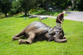elephants 3019