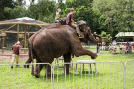 elephants 3146