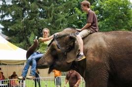 elephants 3188
