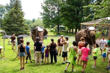 elephants 3246