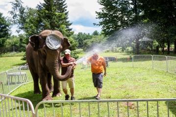 elephants 3276
