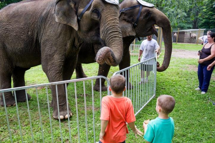 elephants 3287