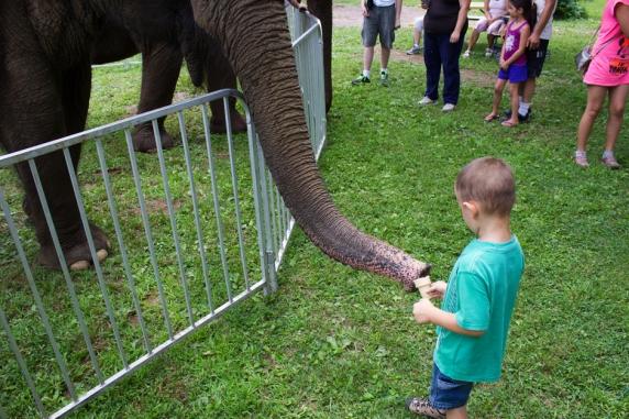 elephants 3290