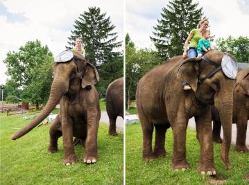 elephants two 1