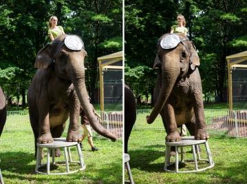 elephants two 3