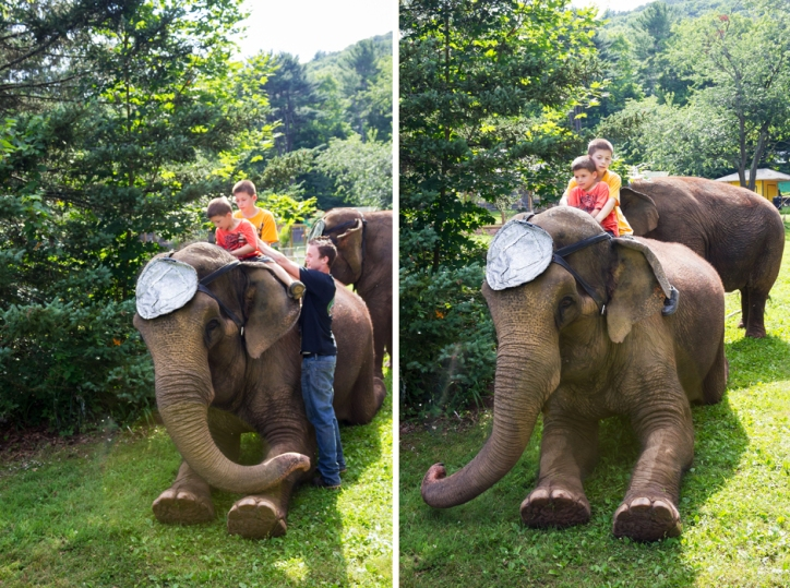 elephants two 4