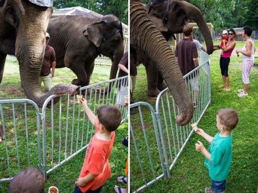 elephants two 5