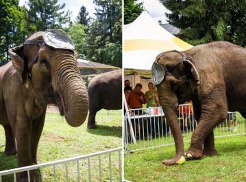 elephants two 8